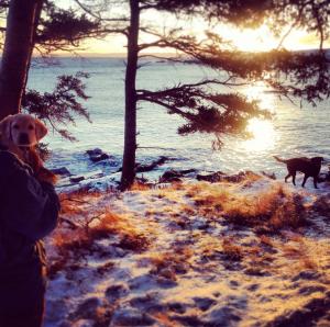 Beautiful Newfoundland sunrise at the cottage