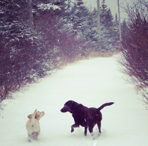 Penny and Fergus running on a snowy trail