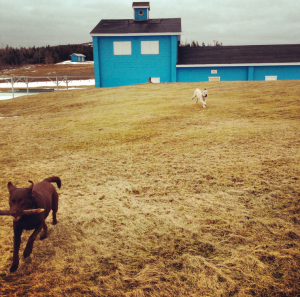 Retrieving sticks at the Harbour Grace boathouse.